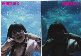 しまうま写真プリントの「色補正」あり・なしの比較結果