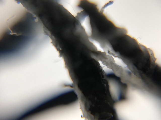 スマホde顕微鏡